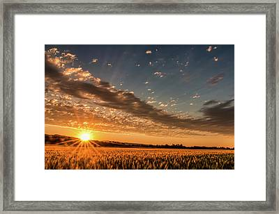 Sunset Over The Golden Meadow Framed Print by Don Schwartz