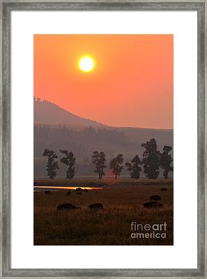 Sunset Over The Herd Framed Print
