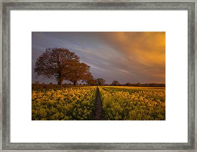 Sunset Over The Rapeseed Field Framed Print by Chris Fletcher