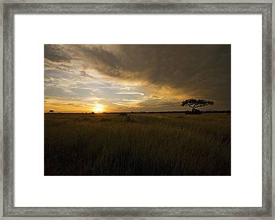 sunset over the Serengeti plains Framed Print