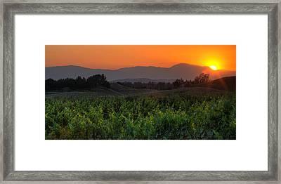 Sunset Over The Vineyard Framed Print