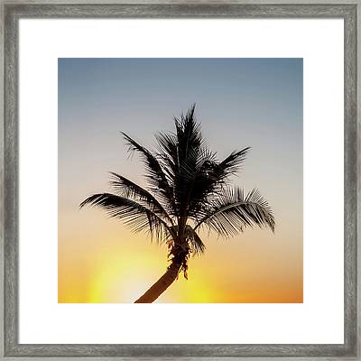 Framed Print featuring the photograph Sunset Palm by Az Jackson