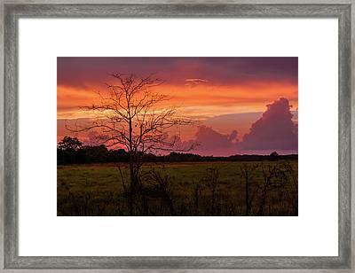 Sunset Pasture Framed Print