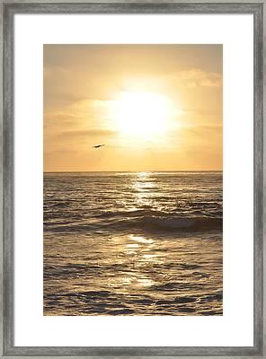 Sunset Pelican Silhouette Framed Print
