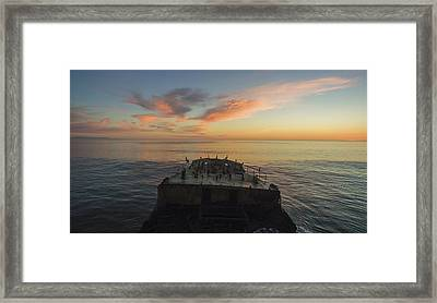 Sunset Perch Framed Print by David Levy