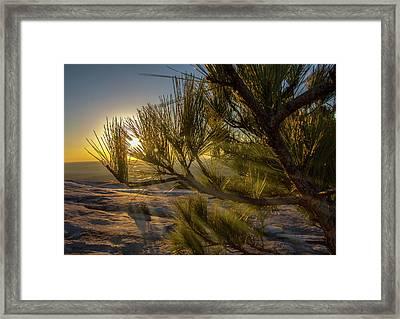 Sunset Pines Framed Print