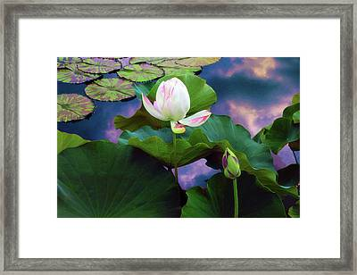 Sunset Pond Lotus Framed Print