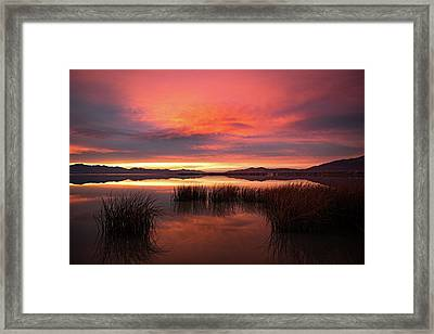 Framed Print featuring the photograph Sunset Reeds On Utah Lake by Wesley Aston