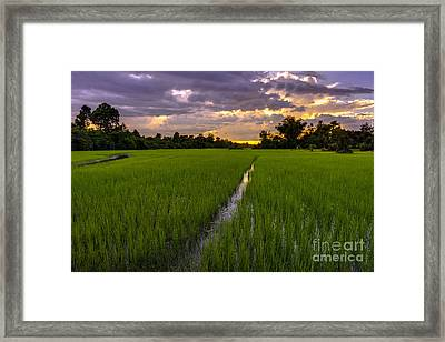 Sunset Rice Fields In Cambodia Framed Print by Mike Reid