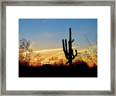 Sunset Saguaro In The Spring Framed Print