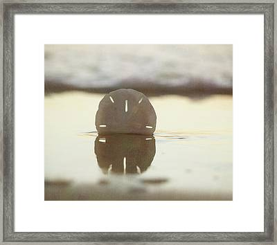 Sunset Sand Dollar Framed Print