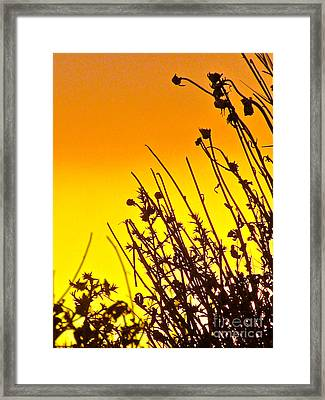 Sunset Sand-doons  Framed Print by Debra     Vatalaro