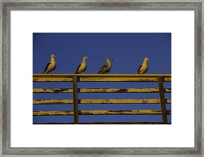 Sunset Seagulls Framed Print by Garry Gay