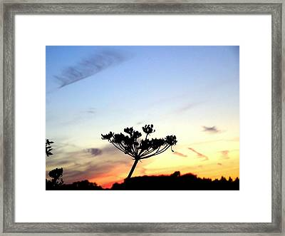 Sunset Seedhead Silhouette  Framed Print