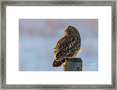 Sunset Short-eared Owl Framed Print