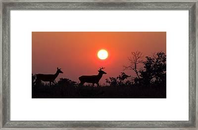 Sunset Silhouette Framed Print by David Dehner