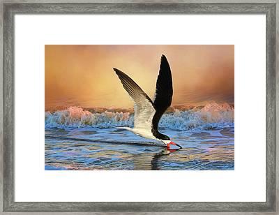 Sunset Skimming Framed Print