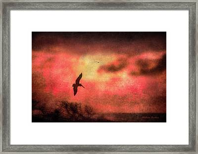 Sunset Soaring II Framed Print