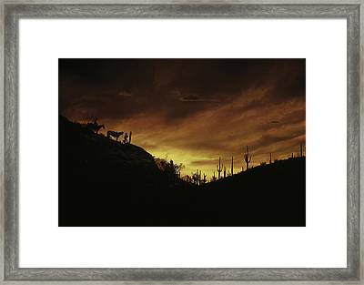 Sunset Sonoran Desert Tuscon Az Framed Print by Panoramic Images