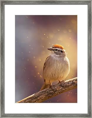 Sunset Sparrow Framed Print