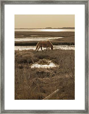 Sunset Stroll Framed Print by Kristopher Schoenleber