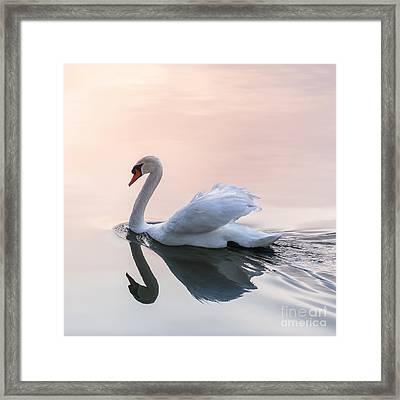 Sunset Swan Framed Print