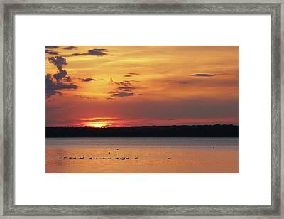 Sunset Swim Framed Print by Lori Deiter