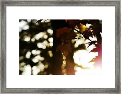 Sunset Through Autumn Foliage Framed Print