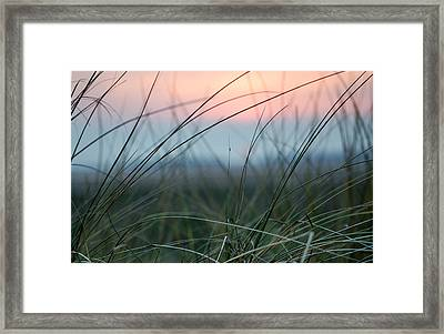 Sunset  Through The Marsh Grass Framed Print