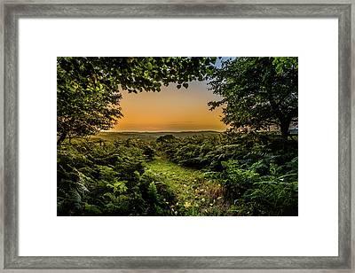 Sunset Through Trees Framed Print