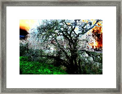 Sunset Framed Print by Tim Tanis
