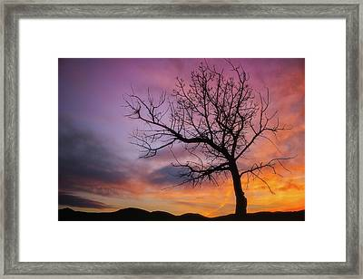 Framed Print featuring the photograph Sunset Tree by Darren White