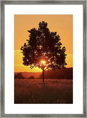 Framed Print featuring the photograph Sunset Tree by Marc Huebner