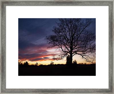 Sunset Tree Framed Print by Michael Edwards