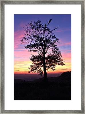 Sunset Tree Framed Print by RKAB Works