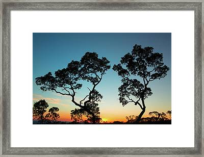 sunset tropical tree savanna Bolivia Framed Print by Dirk Ercken