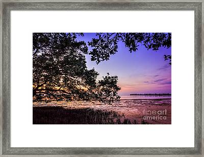 Sunset Under The Mangroves Framed Print