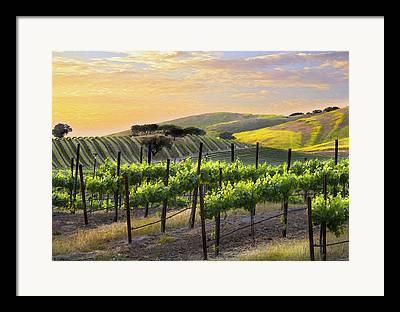 Vineyards Photographs Framed Prints