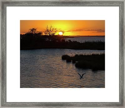 Sunset With An Egret Framed Print