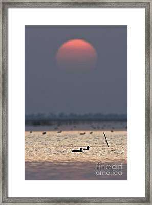 Sunset With Coots Framed Print