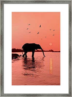 Sunset With Elephant Framed Print by Christian Heeb