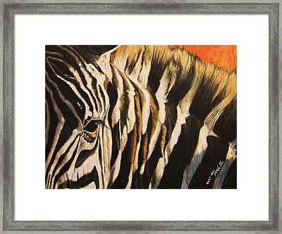 Sunset Zebra Framed Print by Don MacCarthy