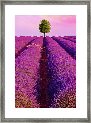 Sunsets Are Purple Framed Print
