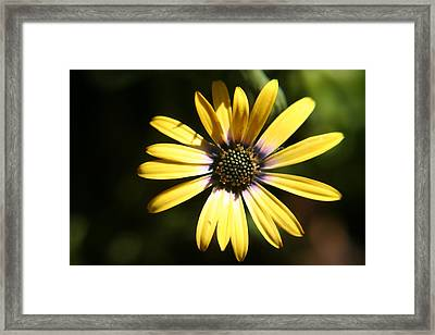 Sunshine Framed Print by Amy Holmes