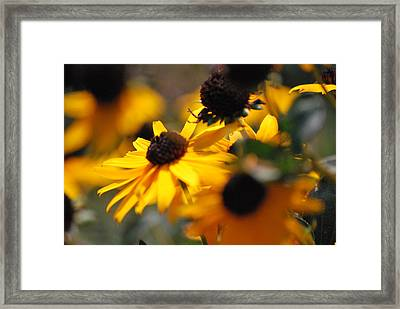 Sunshine And Daisies Framed Print by Trudi Southerland