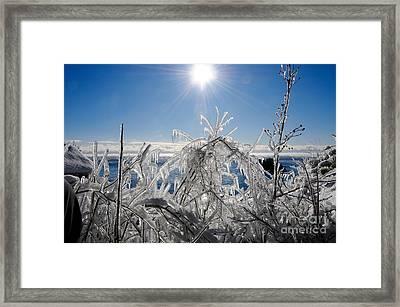 Sunshine And Ice Framed Print by Sandra Updyke