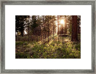 Sunshine And Lupine Framed Print by Mary Lee Dereske
