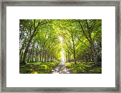 Sunshine And Shadows Framed Print by Debra and Dave Vanderlaan