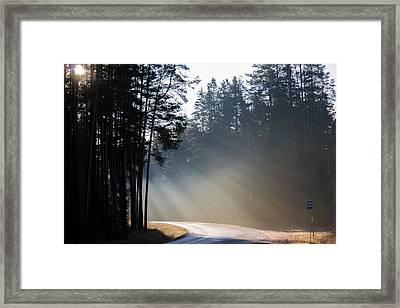 Sunshine In November Framed Print