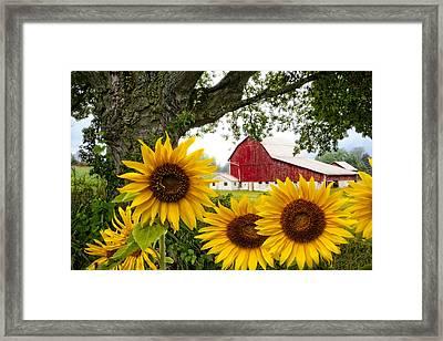 Sunshine In The Fog Framed Print by Debra and Dave Vanderlaan